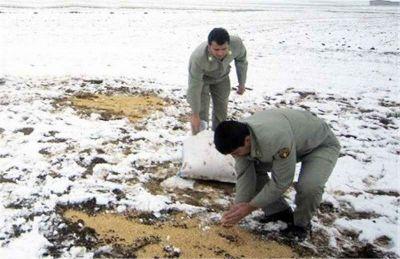 آغاز دانهپاشی برای پرندگان در زیستگاههای استان ایلام